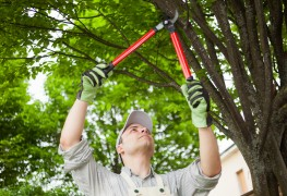 Weeding and pruning your garden: 3 expert tips