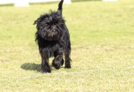 4 possible reasons your dog is limping