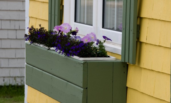 Handy tips for building and maintaining a window box