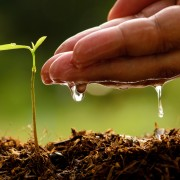 The gardener's guide to fertilizers