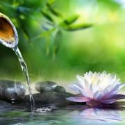 4 steps to a wonderful water garden