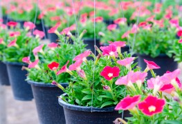 3 tips for starting and maintaining a container garden