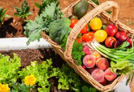Companion planting 101: getting started