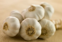 The health and culinary benefits of garlic