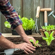 Gardening 101: using compost in your garden
