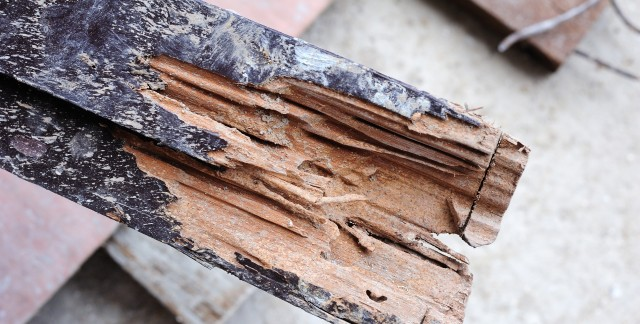 The best ways to keep termites at bay