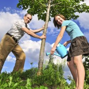 Simple tips for growing low-maintenance yellowwood