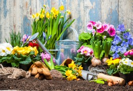 How gardeners use bulbs for year-round colour