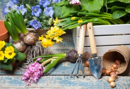 Gardening advice for planting bulbs and corms