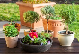 Ways to enhance your home with container plants