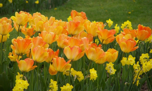 4 reasons to add flowering bulbs to your garden