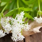 6 vibrant flowering plants for shade gardens