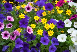 Brightly coloured plants for hot gardens