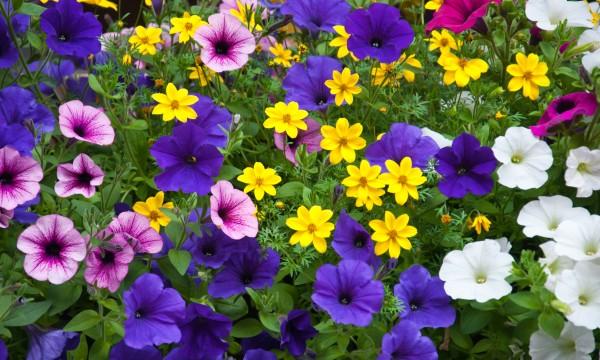 brightly coloured plants for hot gardens smart tips. Black Bedroom Furniture Sets. Home Design Ideas