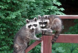 7 strategies that keep wildlife out of your garden