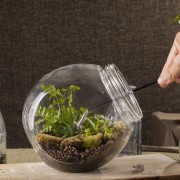 How to create your own terrarium garden