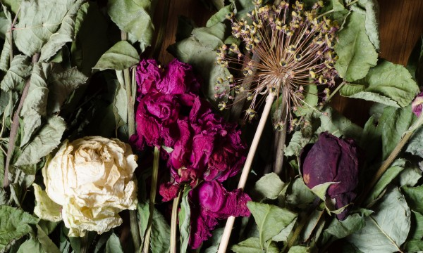 Air dry your flowers in 6 easy steps