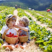 5 tips to picking berries with kids
