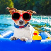6 tips that make vacationing with pets much easier