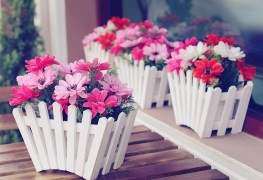 Flower care tips that add colour to your home