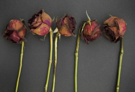 5 little-known facts about flowers