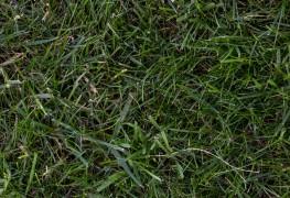 Understanding fertilizers