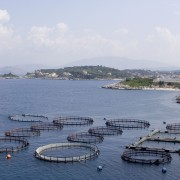 Learn the basics of starting a fish farm