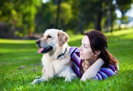 5 tricks every dog owner should know