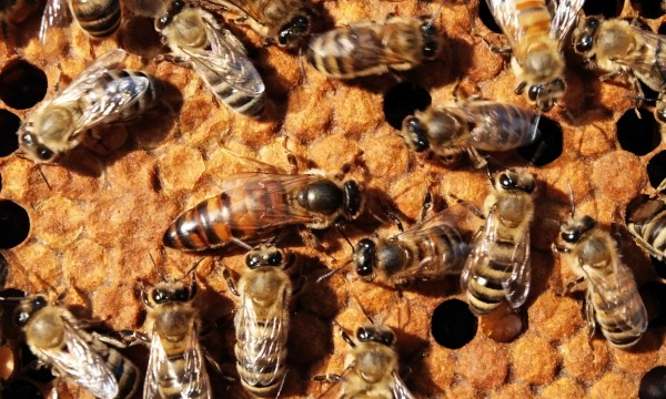 Learn to open a beehive and extract/store honey
