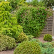 5 ideas for pruning and caring for shrubs