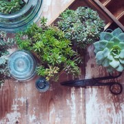 5 pointers for repotting a houseplant
