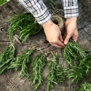 5 tips for growing and cooking with rosemary