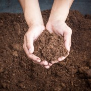 5 uses for peat moss in the garden
