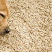 How to keep your carpets clean and cozy