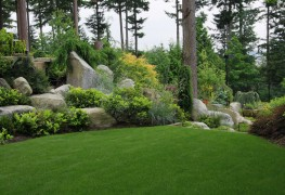 Buying the right lawn fertilizer