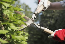 Tips to prune plants and hedges