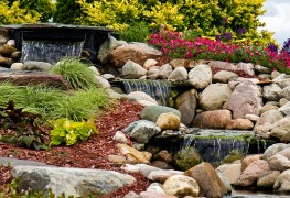 How to choose late blooming flowers and grasses that shine in fall