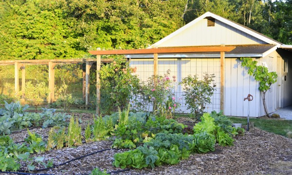 6 Important Tips For Transforming Your Garden With Trellises