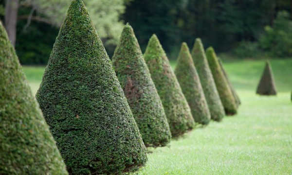 6 professional pruning pointers