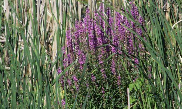 Qué flores & amp; Las plantas crecen bien en tierra arenosa