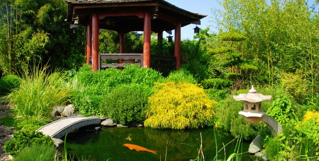 4 simple ways to keep pond fish happy and healthy