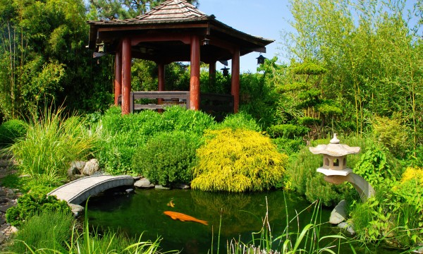 Creating your own garden pond