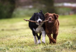 Natural care for pets' minor cuts and scrapes