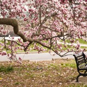 Expert gardening advice to care for magnolias