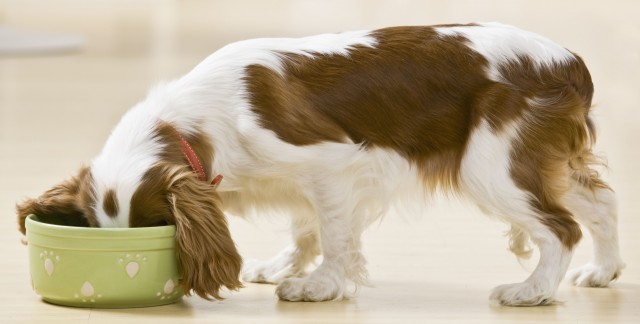 Choosing the best type of food for your pet