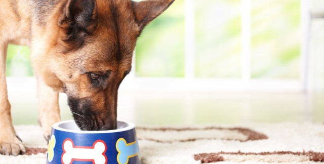 Guide to buying dog food