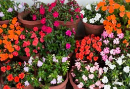 7 easy tips for planting vibrant annuals