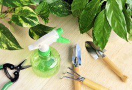7 pointers for treating your garden with fungicides