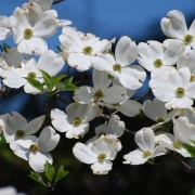7 pruning basics