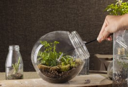 7 steps to making your own terrarium